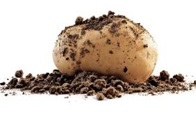 Selenella Patata