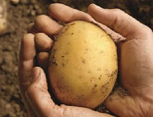 PATATE NOVELLE – LE AZIENDE AGRICOLE SICILIANE CON SELENELLA CELEBRANO I 10 ANNI DI UNA PATATICOLTURA D'ECCELLENZA