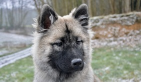 cucciolo cane per bureau magazine qualità