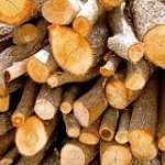 Conlegno Monitoring Organisation Direzione Generale Foreste Magazine Qualità