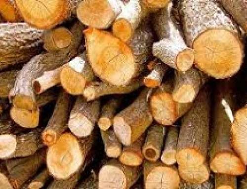 Conlegno e la Direzione Generale Foreste fanno fronte comune per contrastare il fenomeno del legno illegale
