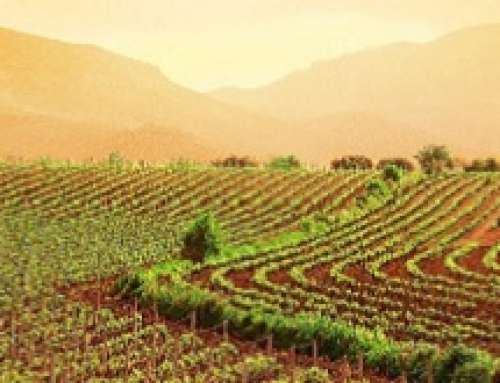 La certificazione della sostenibilità nella filiera vitivinicola. Convegno a Conegliano (Tv) il 22 novembre