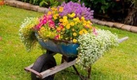 comuni fioriti su magazine qualità
