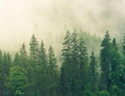 BUREAU VERITAS RACCOGLIE LA SFIDA PER LA DIFESA DELLE GRANDI FORESTE