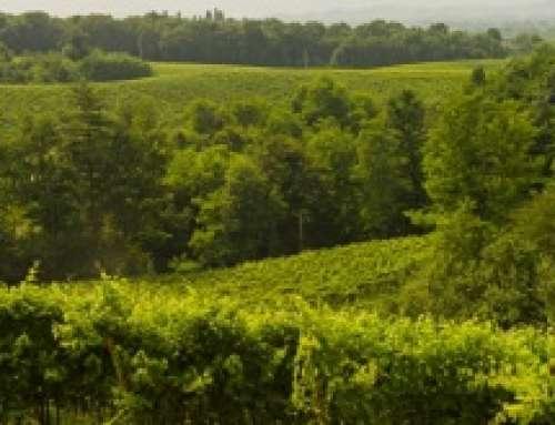 Giusti Wine: investire nell'ambiente fa bene alle aziende e al territorio