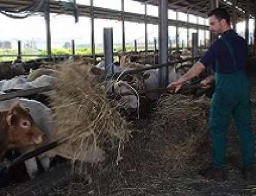 """Il ministero ha approvato il disciplinare di etichettatura della """"Fattorie Toscane"""""""