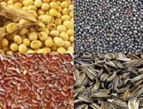UNI – Oli vegetali: pubblicata la UNI EN ISO 17059