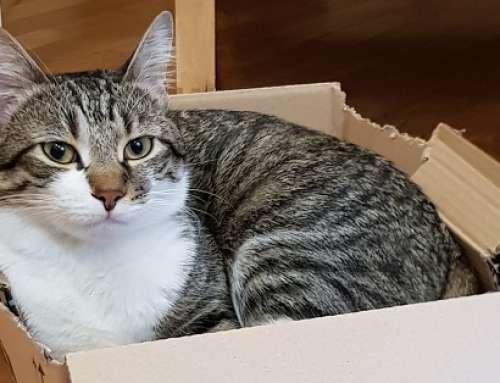 Nella Giornata nazionale del gatto Comieco rivolge un appello ai loro padroni
