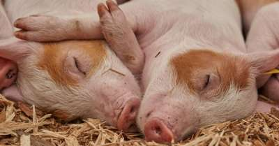 benessere animale kiwa su magazine qualità