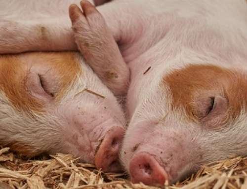 Sostenibilità e Futuro: l'importanza del Benessere Animale