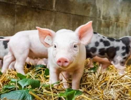 Filiera agroalimentare e sostenibilità: le Certificazioni come valore aggiunto