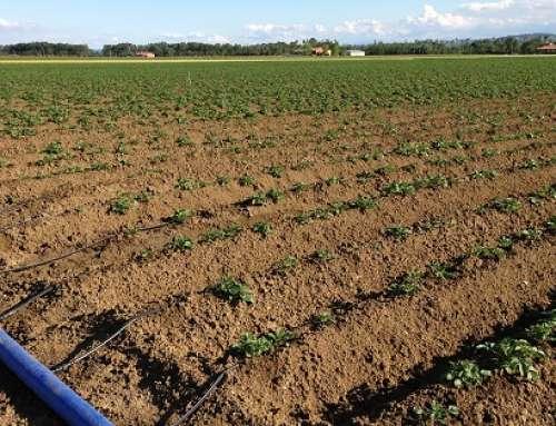 Romagnoli F.lli celebra la giornata mondiale dell'acqua con Patata di Campo-Amica dell'ambiente