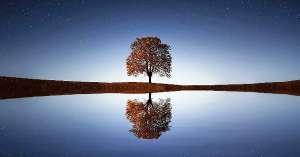 ambiente albero UNI su Magazine Qualità