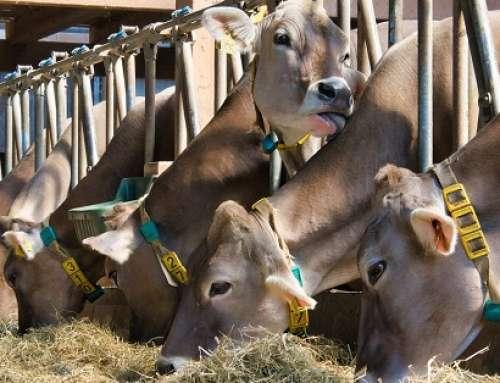 Mangimi per animali –Metodo di campionamento e analisi: tutto nella nuova UNI EN 15742