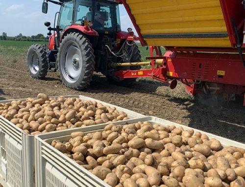 Romagnoli F.lli: annata positiva per le patate dell'Emilia Romagna
