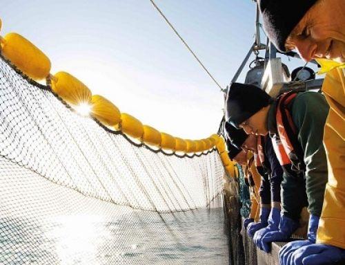 La pandemia non ferma la corsa alla sostenibilità ittica